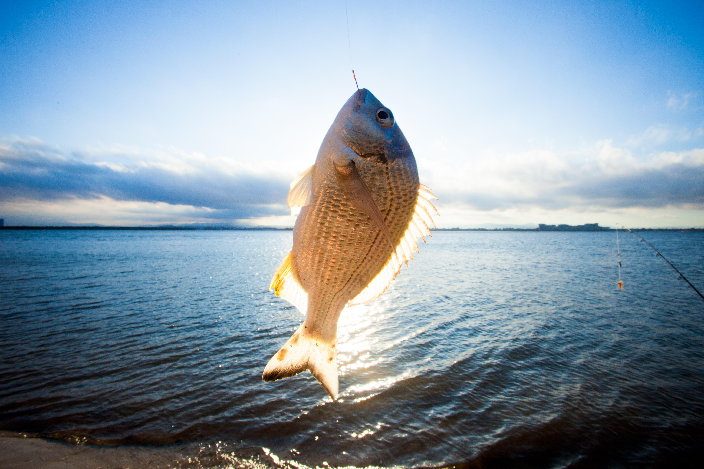 Fish caught on line
