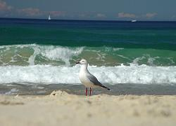 Sea Bird on the Beach